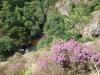El rio Esva en verano