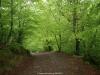 Precioso camino por el bosque