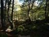Bosque de Fabucao