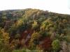 Mucho colorido en el monte