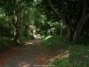 Bosque de Reborio