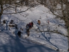 cruzando el bosque con nieve